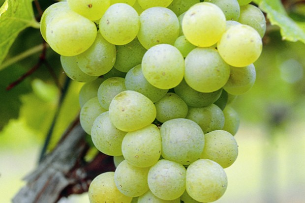 Blaye Côtes de Bordeaux - Appellation Blaye Côtes de Bordeaux Blanc