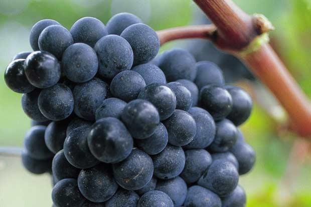 Blaye Côtes de Bordeaux - Nos vins - Appellation Blaye Côtes de bordeaux rouge