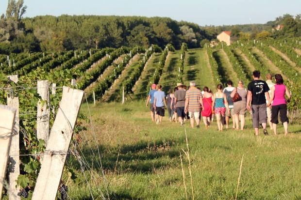 Blaye Côtes de Bordeaux - Nos activites oenotouristiques